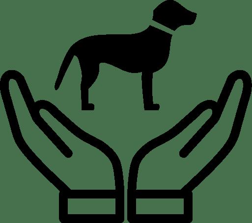 Animale, Animale Companie, Accesorii, Hrana Animale